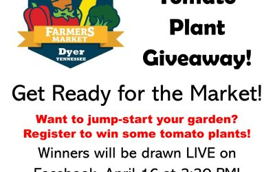 Tomato  Plant Giveaway!
